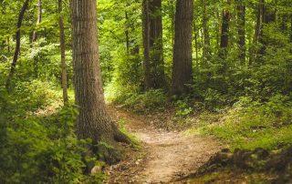 Schnitzeljagd im Wald: Ideen für Spaziergang und Feier