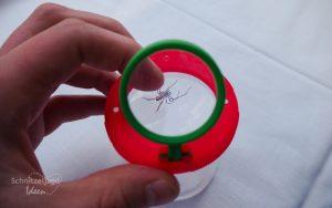 Lupenbecher im Test: Insekten unter der Lupe