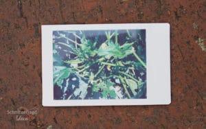 Polaroid nach 2 Minuten: Testfotos der Instax Mini 9