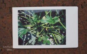 Polaroid Test: Foto nach 3 Minuten fertig entwickelt